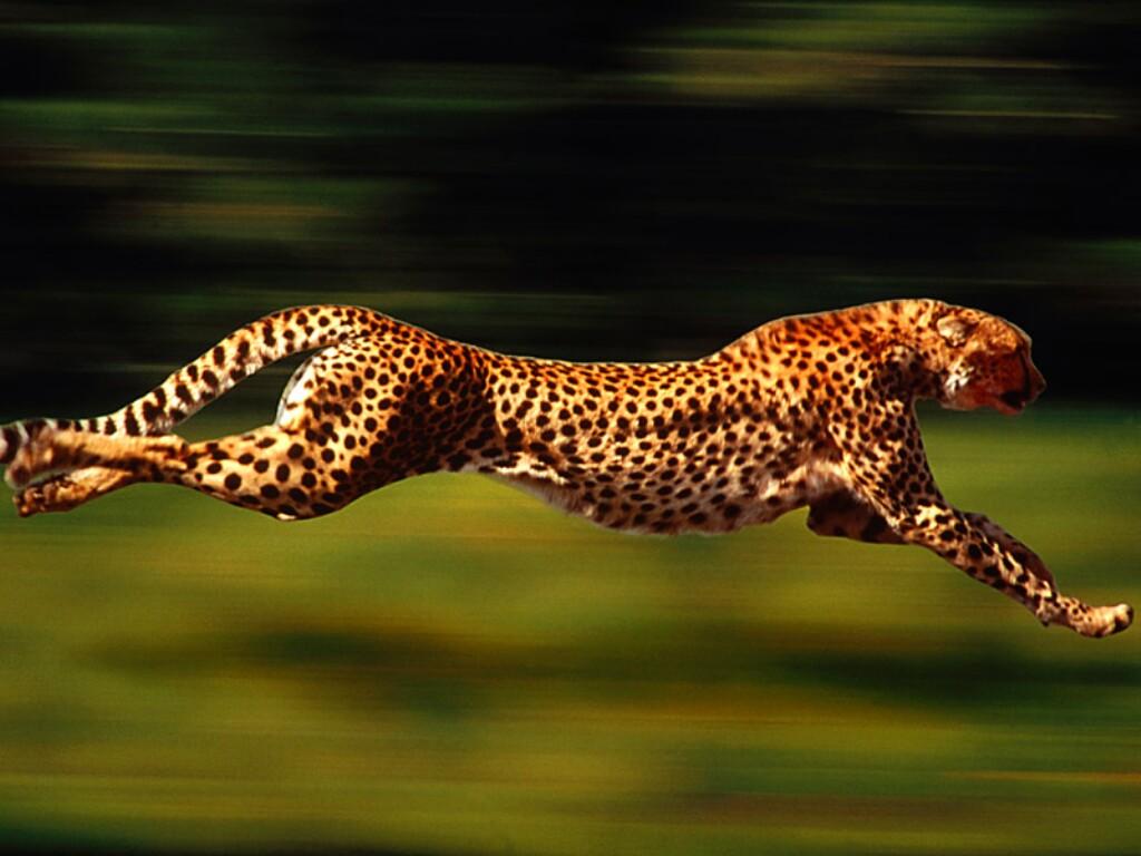external image kenetic-cougar.jpg