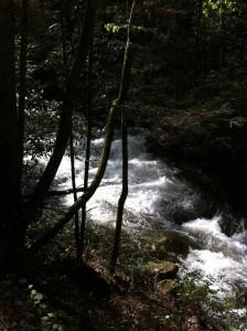 Hemlock--overflowing stream
