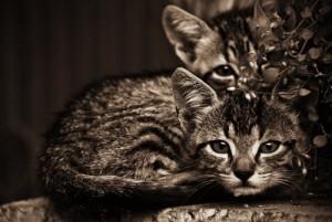 animal kittens