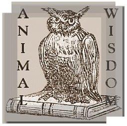 animal totem owl
