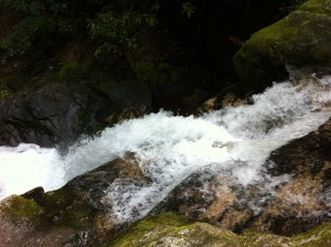 Raven Cliffs Trail 014