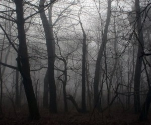 gothic forest 2