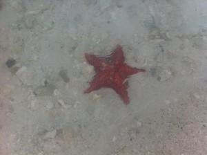 starfish water