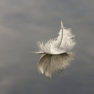 Hope feather