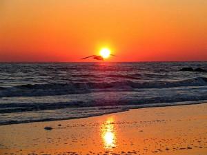 hope ocean bird