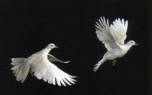 hope soaring birds