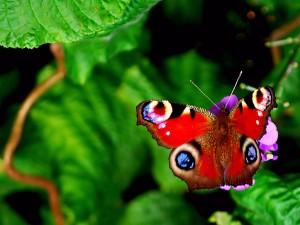 beauty butterfly