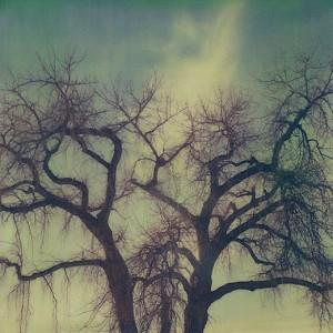 soul weary tree