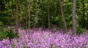 woods flowers