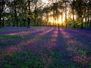 woods flowers sunrise