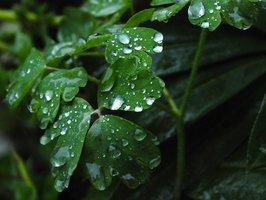 treas raining leaves